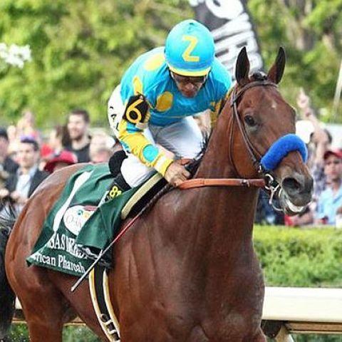 Preakness Stakes Betting Predictions